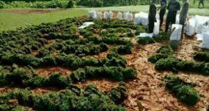 Tukang Rumput Gajah Mini Jakarta