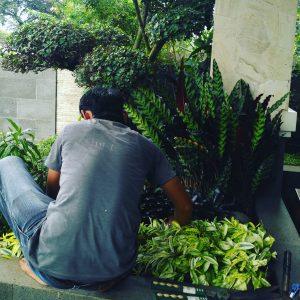 Tukang Taman Pasar Minggu