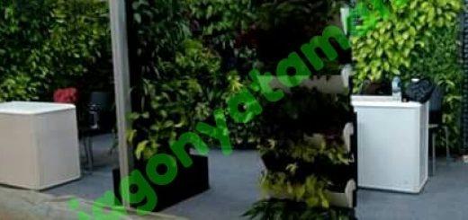Jasa Tukang Taman Vertikal BSD Tangerang Vertikal Garden
