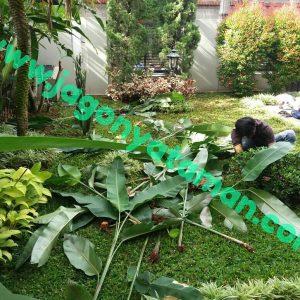 Jasa Perawatan Taman Tangerang BSD Murah