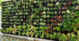 Jasa Taman Vertikal Garden Depok (Vertical Garden)