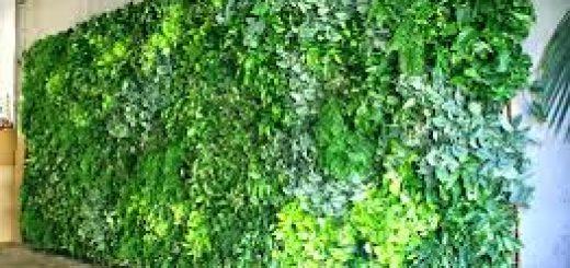 jasa tukang taman vertikal garden jakarta